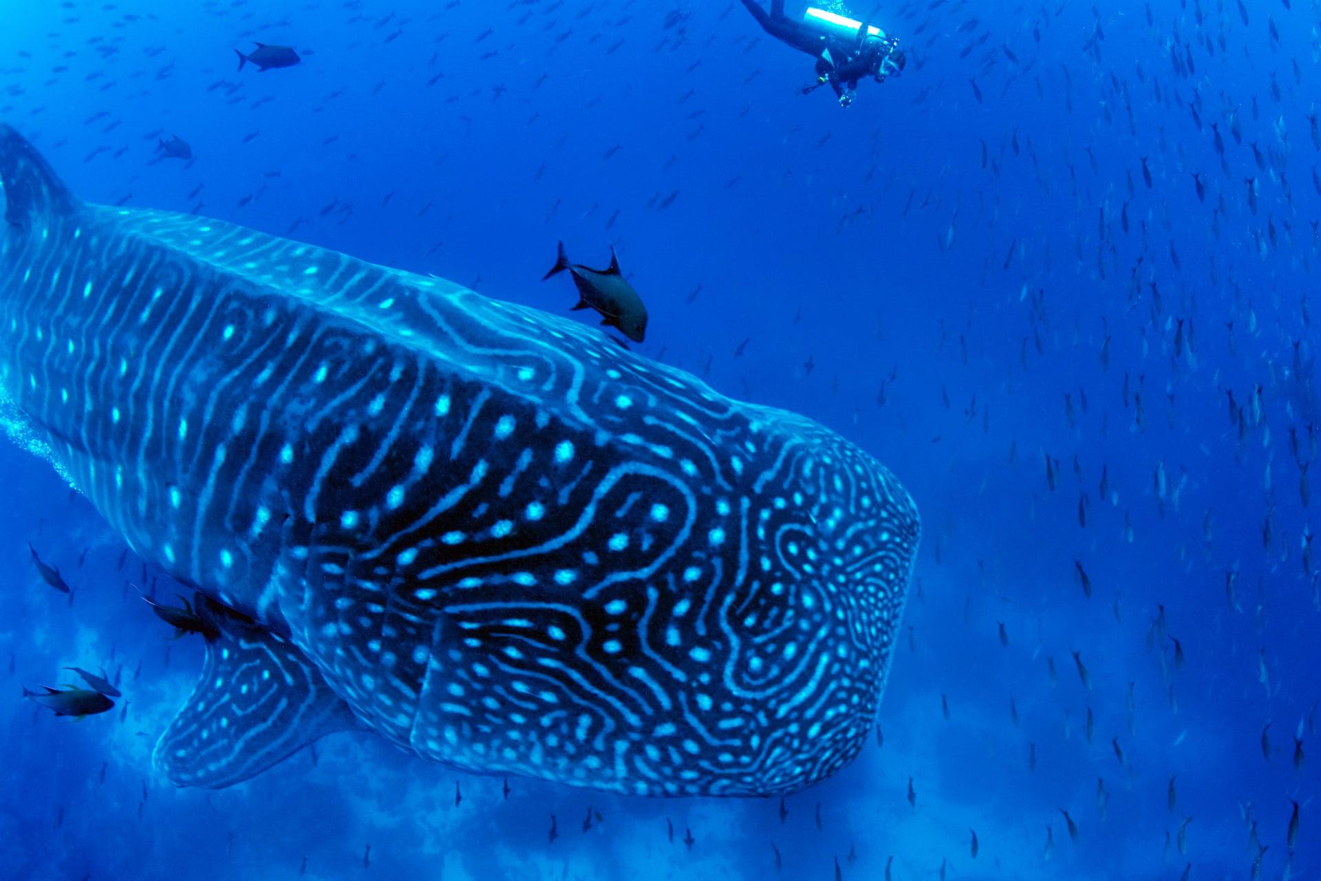 Hươu cao cổ và biển quảng cáo lọt top ảnh đẹp động vật tuần qua - Ảnh 6.