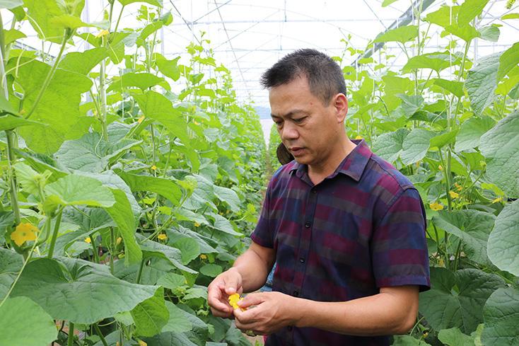 """Quảng Bình: Một nông dân """"đánh liều"""" bỏ ra cả tỷ đồng trồng dưa lưới công nghệ cao trên cát - Ảnh 2."""