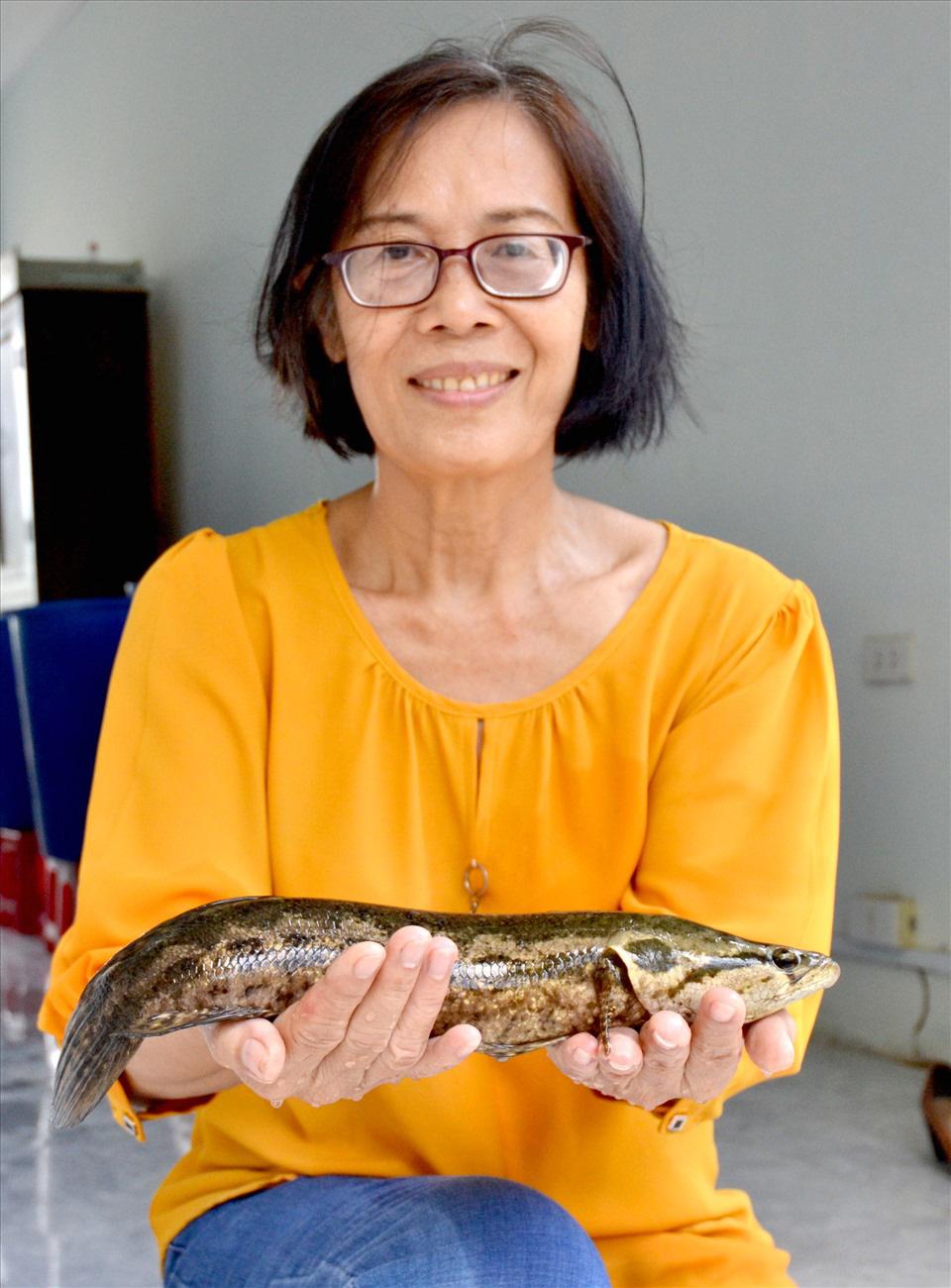 Một trường Đại học ở tỉnh Kiên Giang nhân giống thành công loài cá dày nhìn y hệt con cá lóc - Ảnh 1.