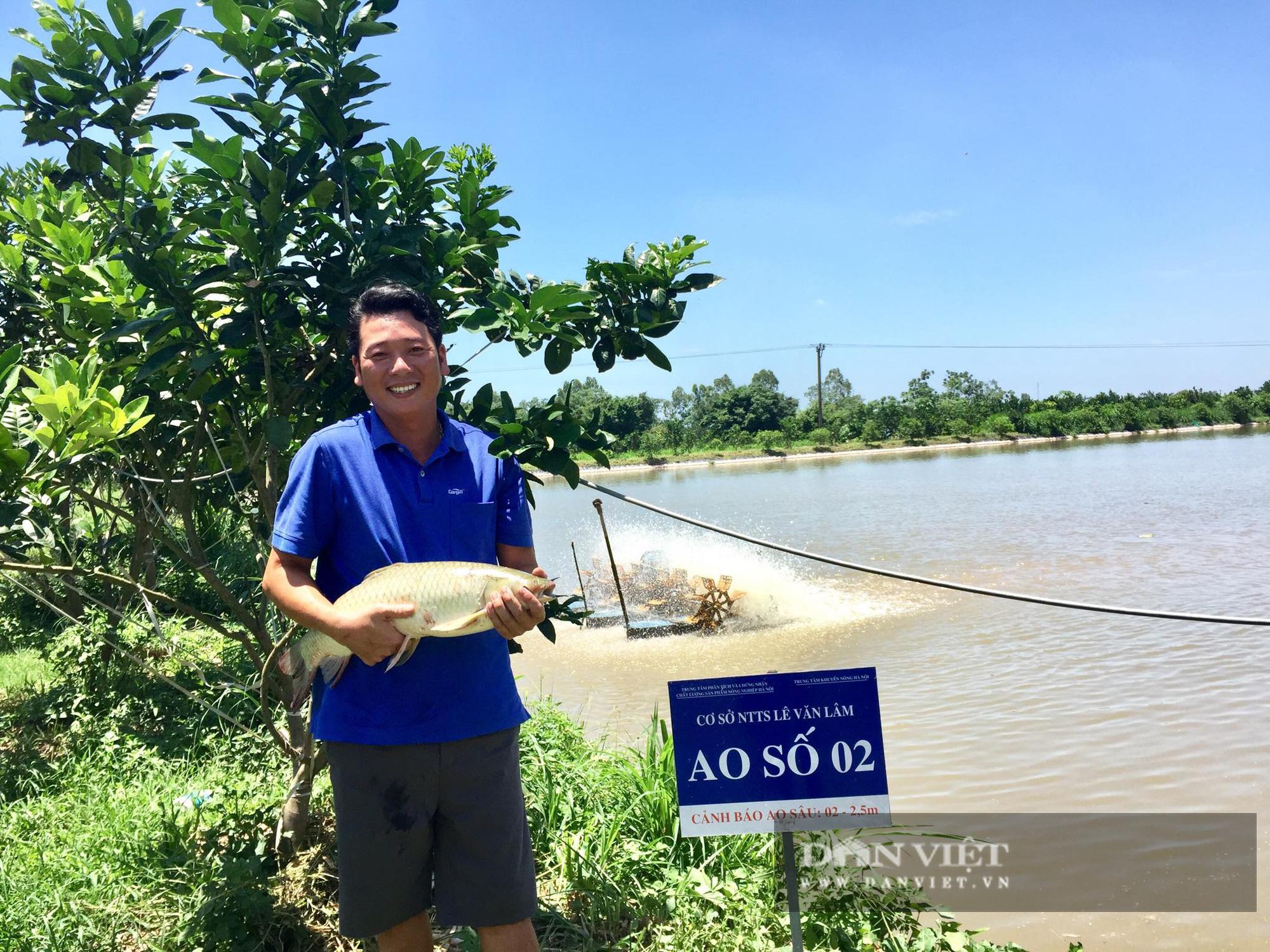 Hà Nội: Anh nông dân nuôi toàn con cá to bự chuẩn VietGAP, lái buôn đến tận ao mua hết - Ảnh 2.