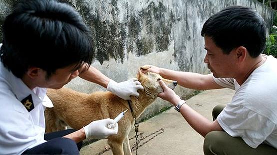Triển khai quyết liệt phòng, chống bệnh dại ở động vật - Ảnh 1.