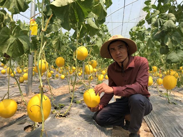 Bỏ việc lương nghìn đô về trồng dưa công nghệ Israel - Ảnh 1.