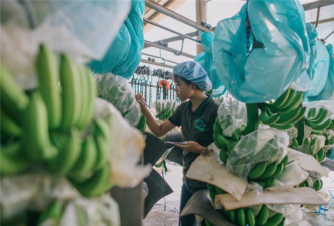 Logistics đang 'đè bẹp' sức cạnh tranh của nông sản Việt - Ảnh 1.