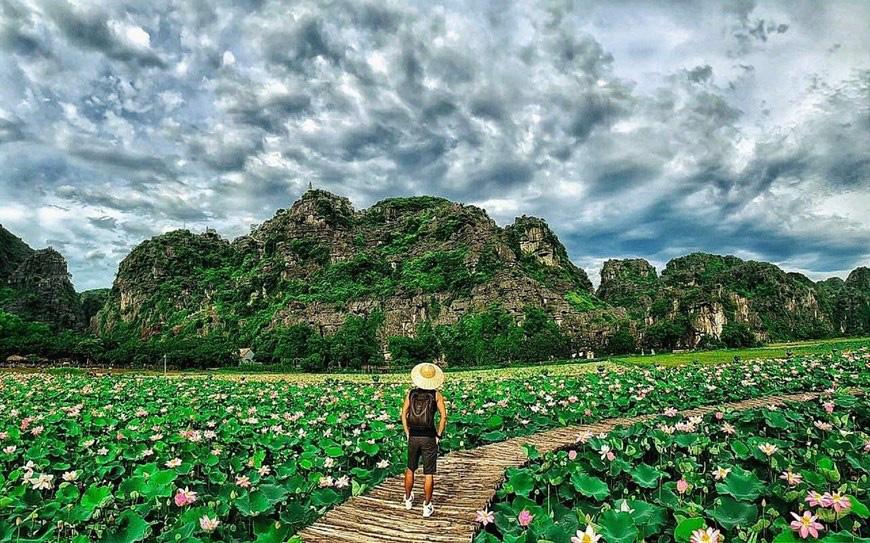 """Lạ Ninh Bình: Đang giữa mùa Thu, đầm sen """"kỳ lạ nhất Việt Nam"""" bỗng dưng nở rộ sắc màu - Ảnh 12."""