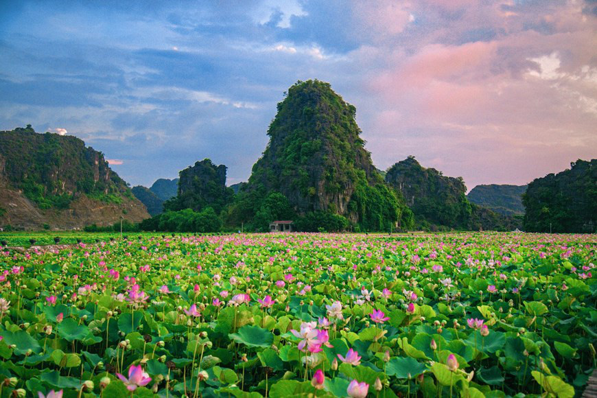 """Lạ Ninh Bình: Đang giữa mùa Thu, đầm sen """"kỳ lạ nhất Việt Nam"""" bỗng dưng nở rộ sắc màu - Ảnh 13."""