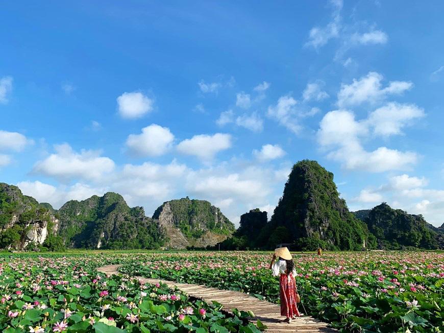 """Lạ Ninh Bình: Đang giữa mùa Thu, đầm sen """"kỳ lạ nhất Việt Nam"""" bỗng dưng nở rộ sắc màu - Ảnh 9."""