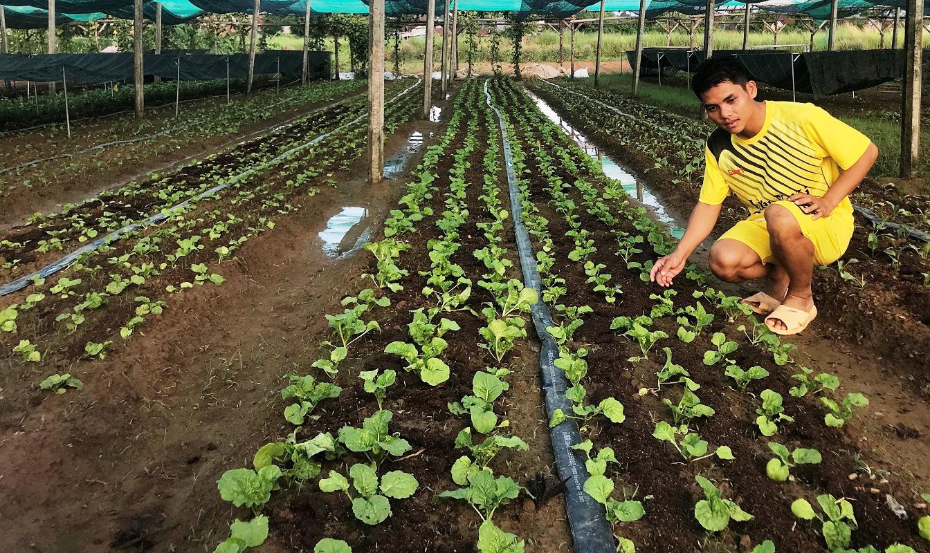 Đi Nhật học trồng rau, chàng trai Bình Định dùng ớt, sả, thuốc lá, tỏi, gừng… trị sâu bệnh gây hại - Ảnh 3.