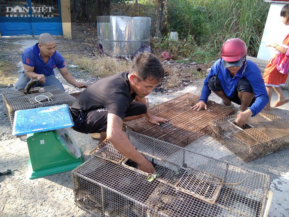 Đồng Tháp: Nước tràn đồng, dân tấp nập săn bắt chuột đồng, mối thu gom vài tạ chuột mỗi ngày bán giá cao - Ảnh 2.