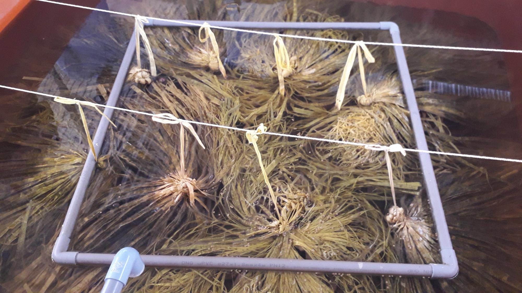 Trại nuôi lươn không bùn trên cạn lớn nhất tỉnh Bạc Liêu có gì độc đáo mà tấp nập người tìm đến xem? - Ảnh 3.
