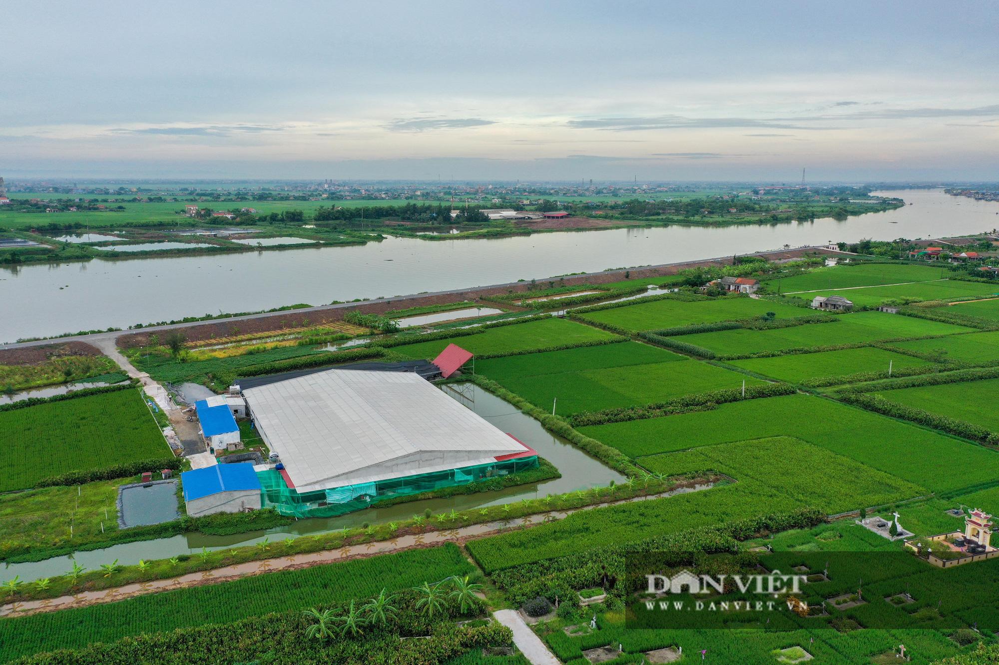 Nam Định: Dân khốn đốn vì trang trại lợn 1.500 con xả thải ra sông - Ảnh 1.
