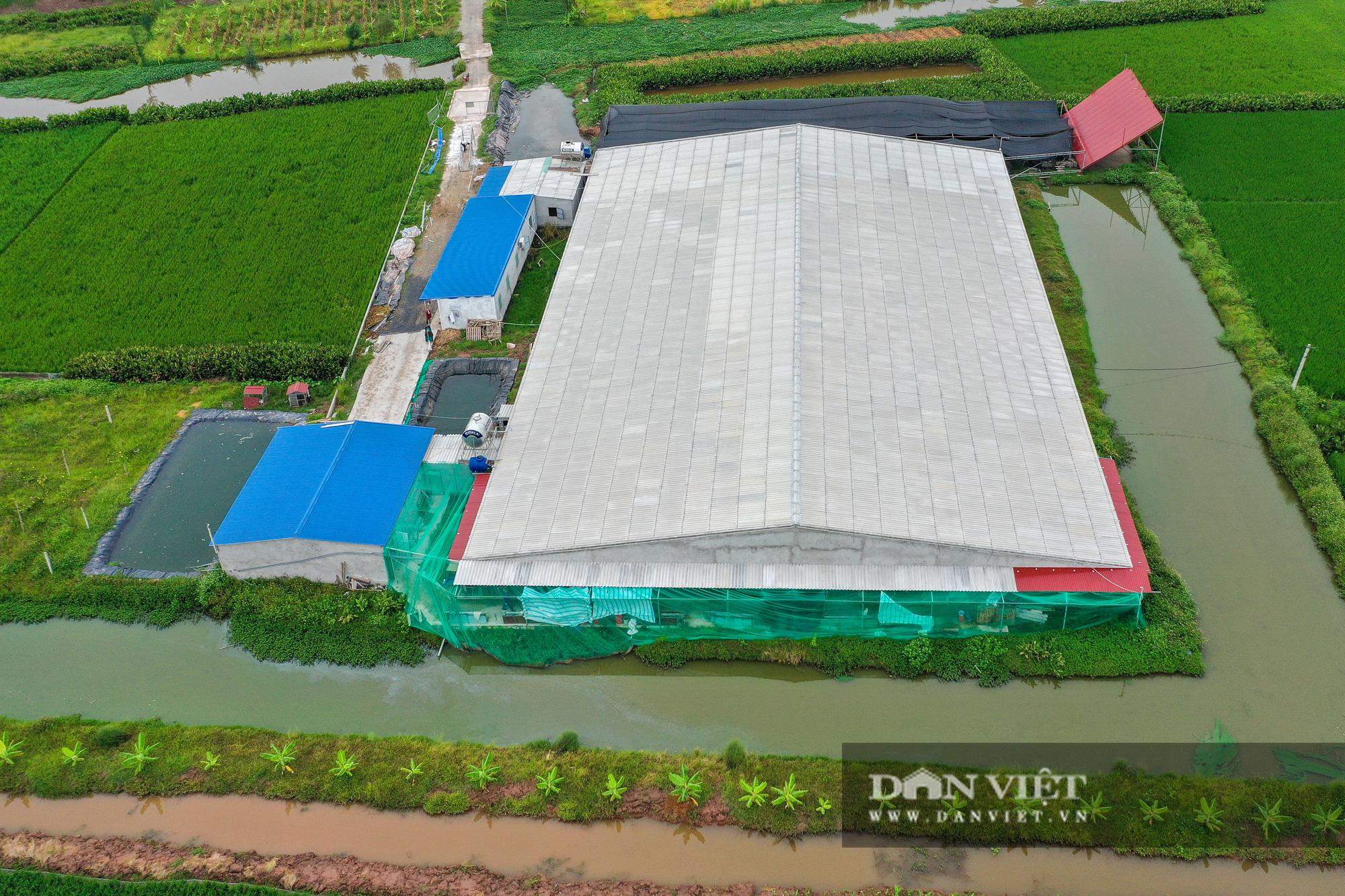 Nam Định: Dân khốn đốn vì trang trại lợn 1.500 con xả thải ra sông - Ảnh 2.