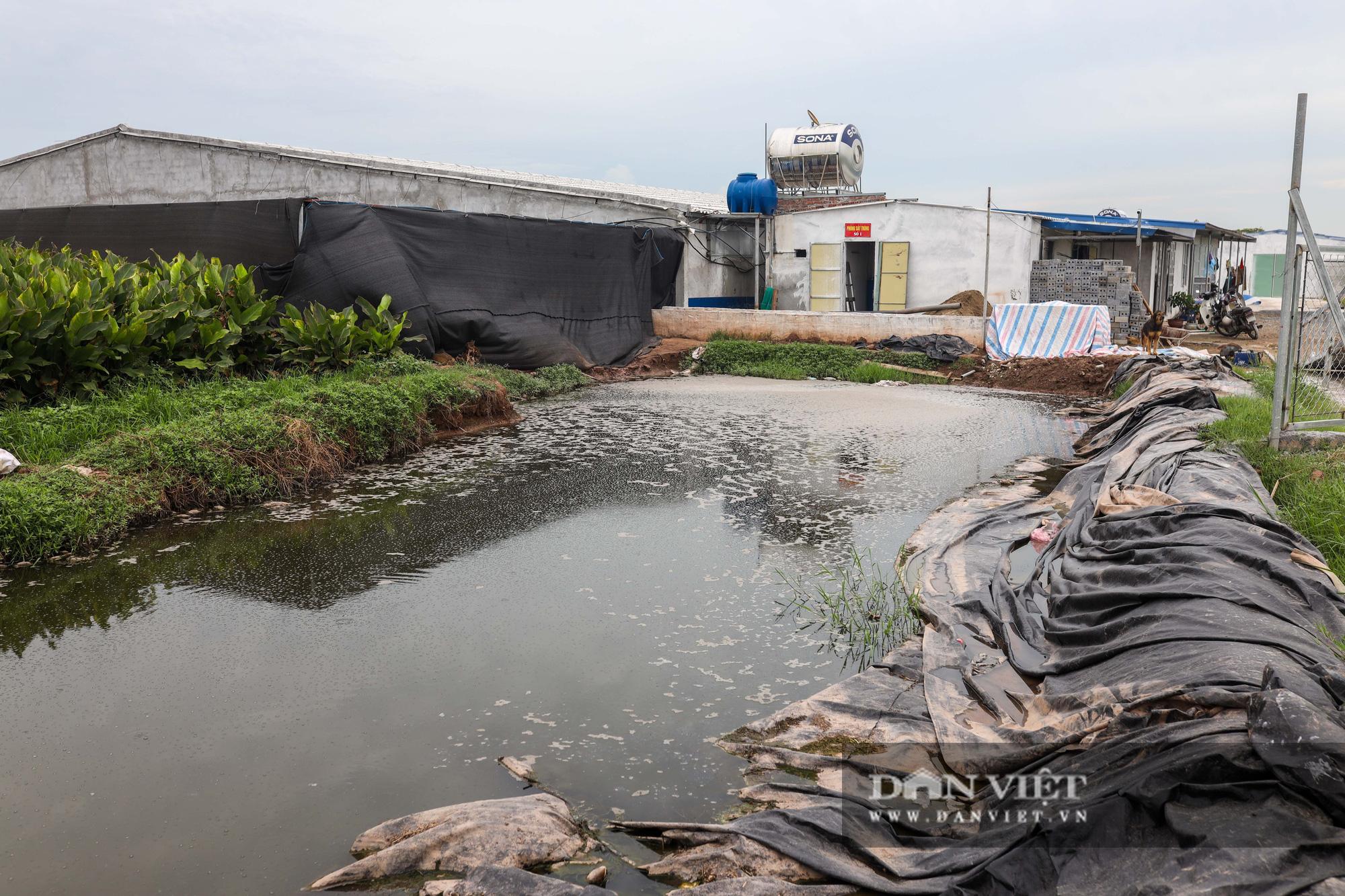 Nam Định: Dân khốn đốn vì trang trại lợn 1.500 con xả thải ra sông - Ảnh 3.