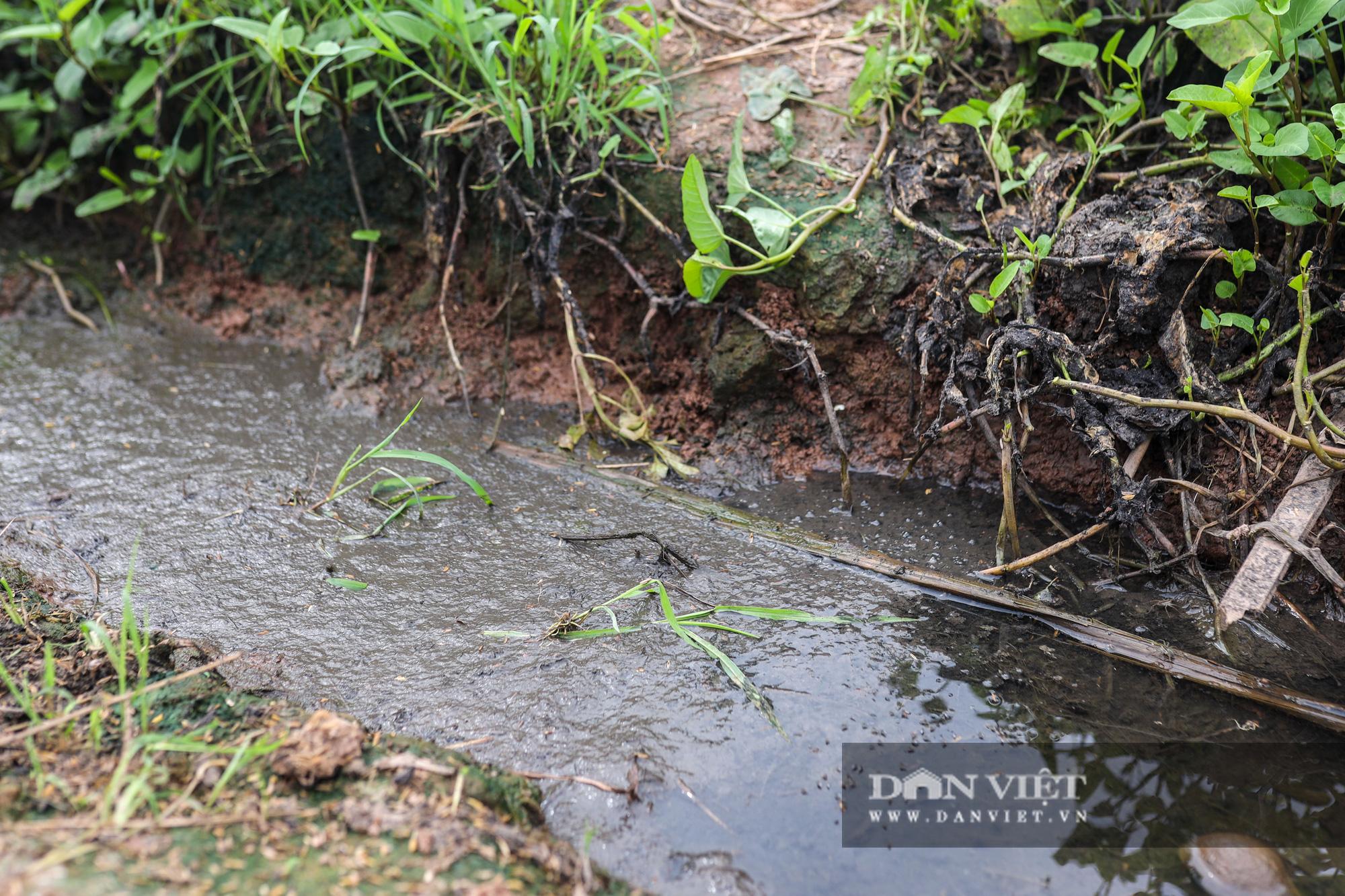 Nam Định: Dân khốn đốn vì trang trại lợn 1.500 con xả thải ra sông - Ảnh 5.