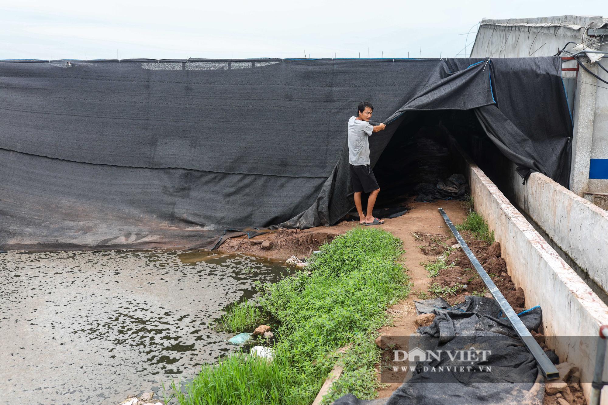 Nam Định: Dân khốn đốn vì trang trại lợn 1.500 con xả thải ra sông - Ảnh 6.