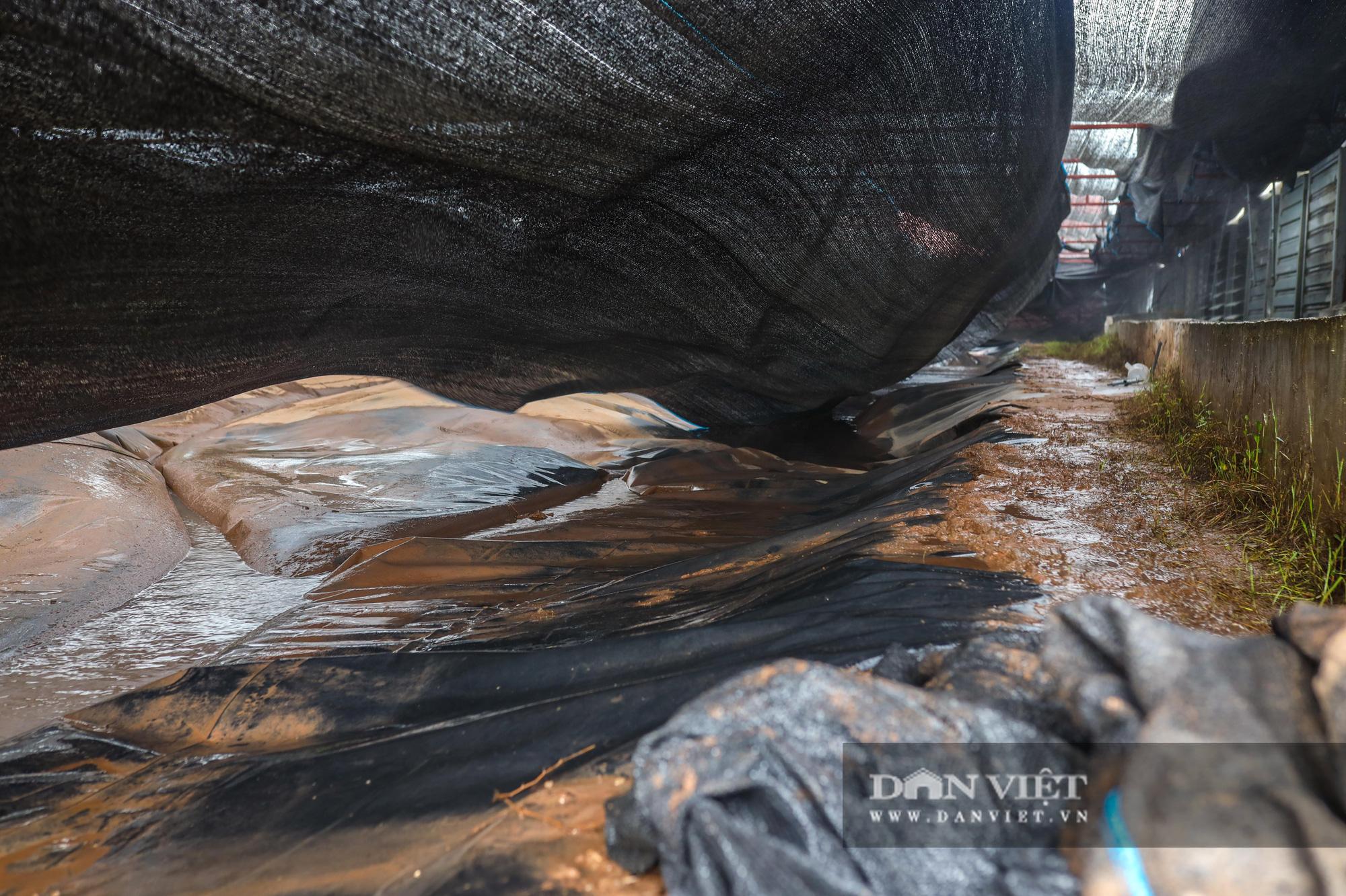 Nam Định: Dân khốn đốn vì trang trại lợn 1.500 con xả thải ra sông - Ảnh 7.