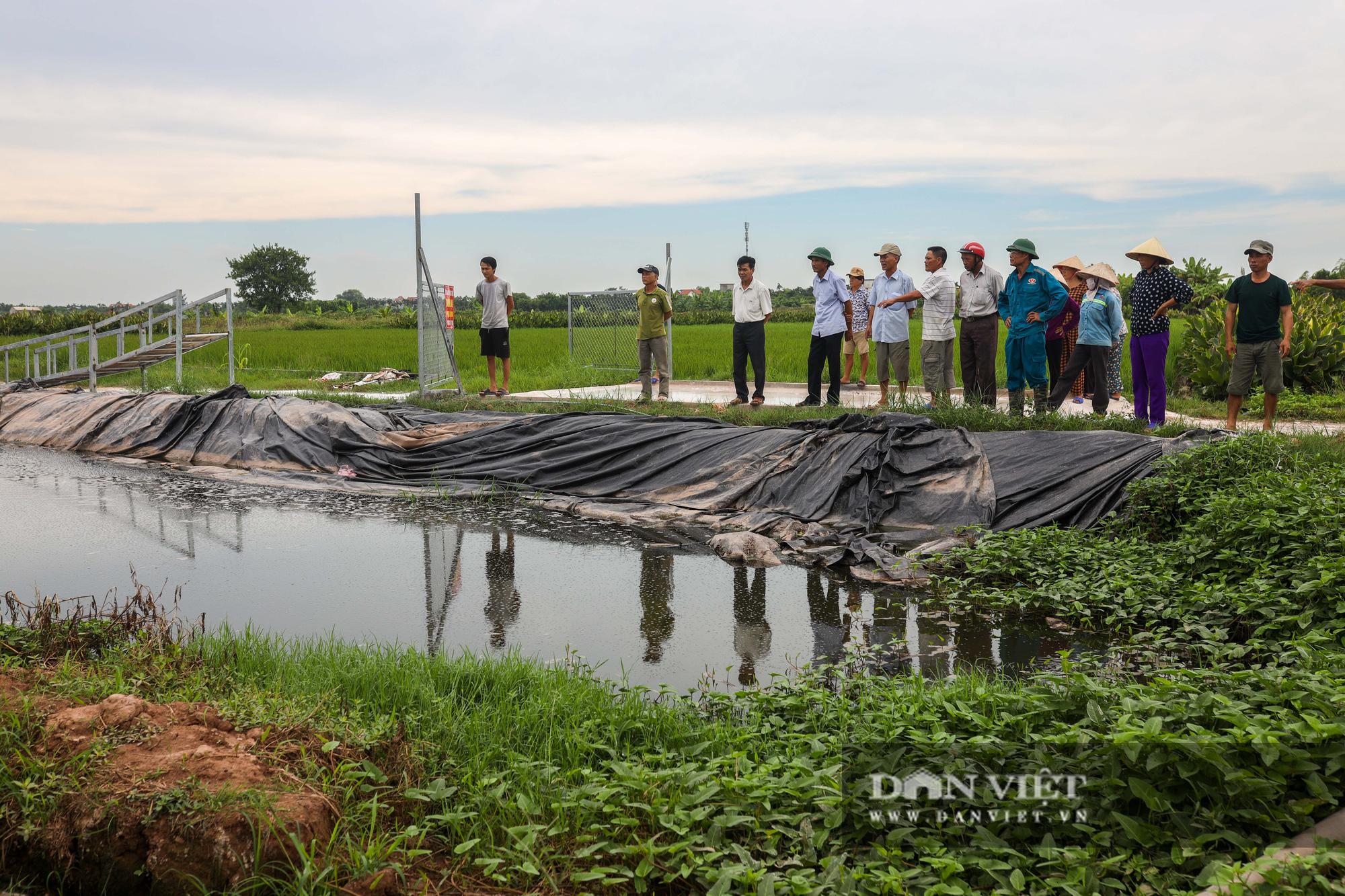 Nam Định: Dân khốn đốn vì trang trại lợn 1.500 con xả thải ra sông - Ảnh 8.