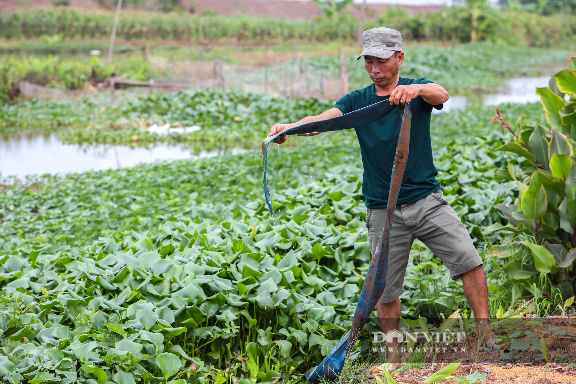 Nam Định: Dân khốn đốn vì trang trại lợn 1.500 con xả thải ra sông - Ảnh 9.