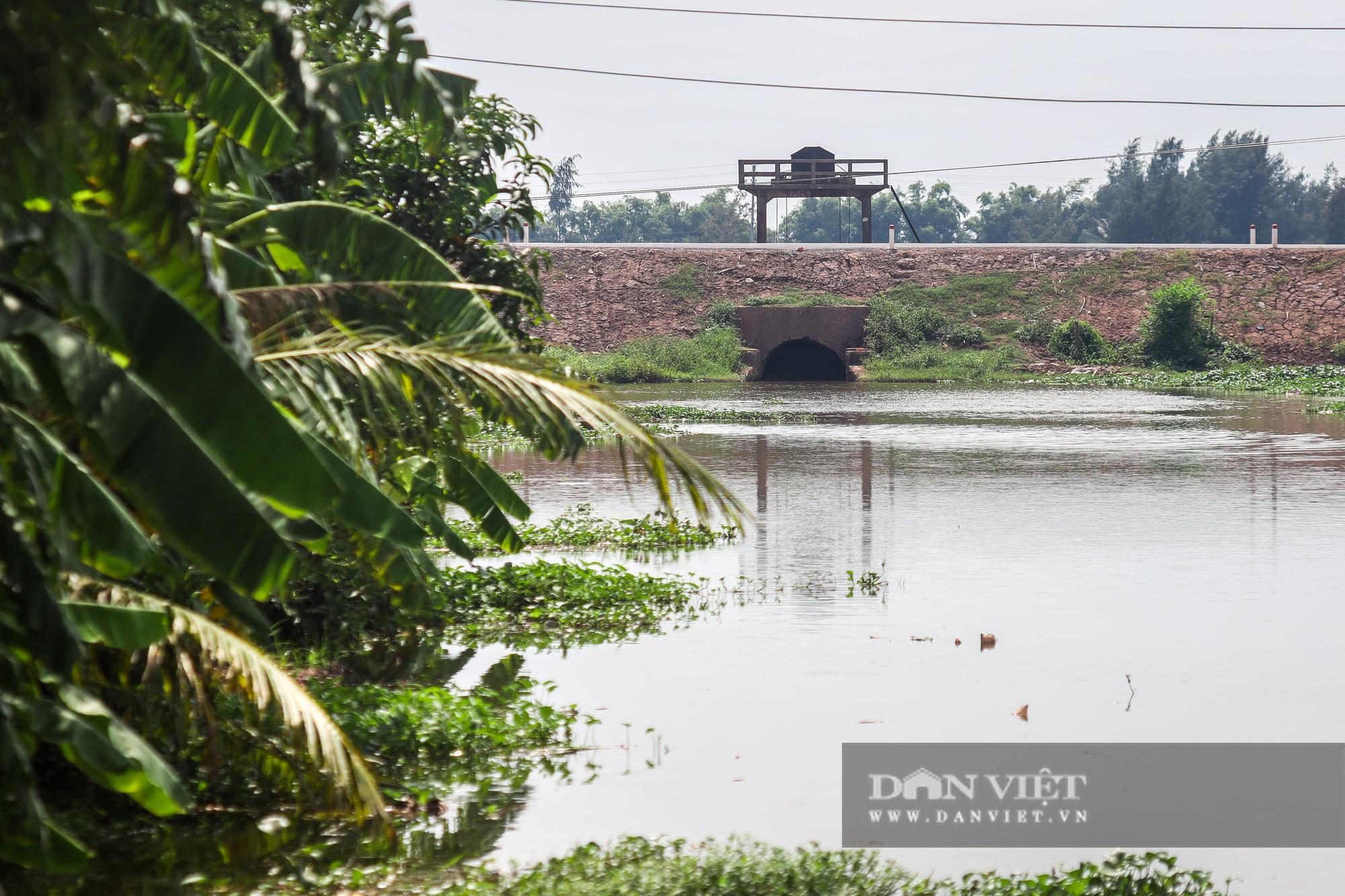 Nam Định: Dân khốn đốn vì trang trại lợn 1.500 con xả thải ra sông - Ảnh 13.
