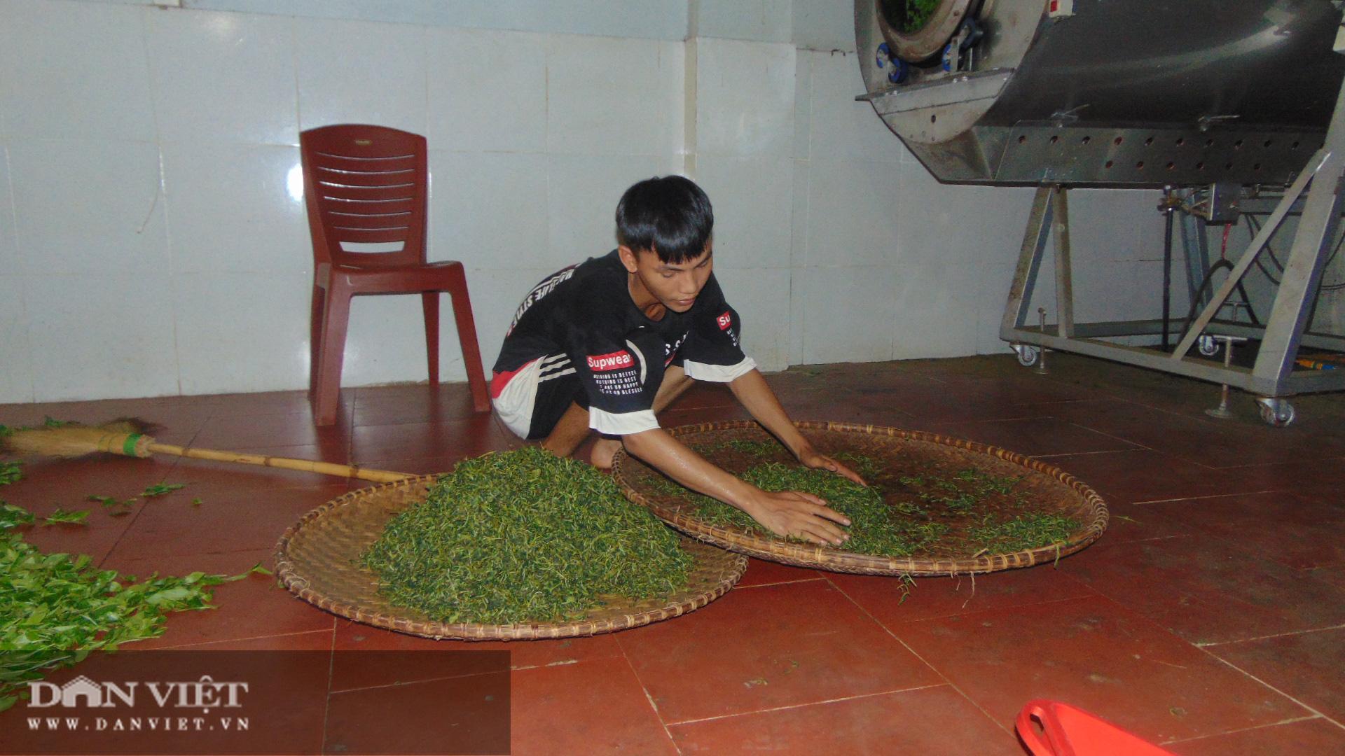 Thanh niên trẻ khởi nghiệp với nghề chè truyền thống  - Ảnh 5.
