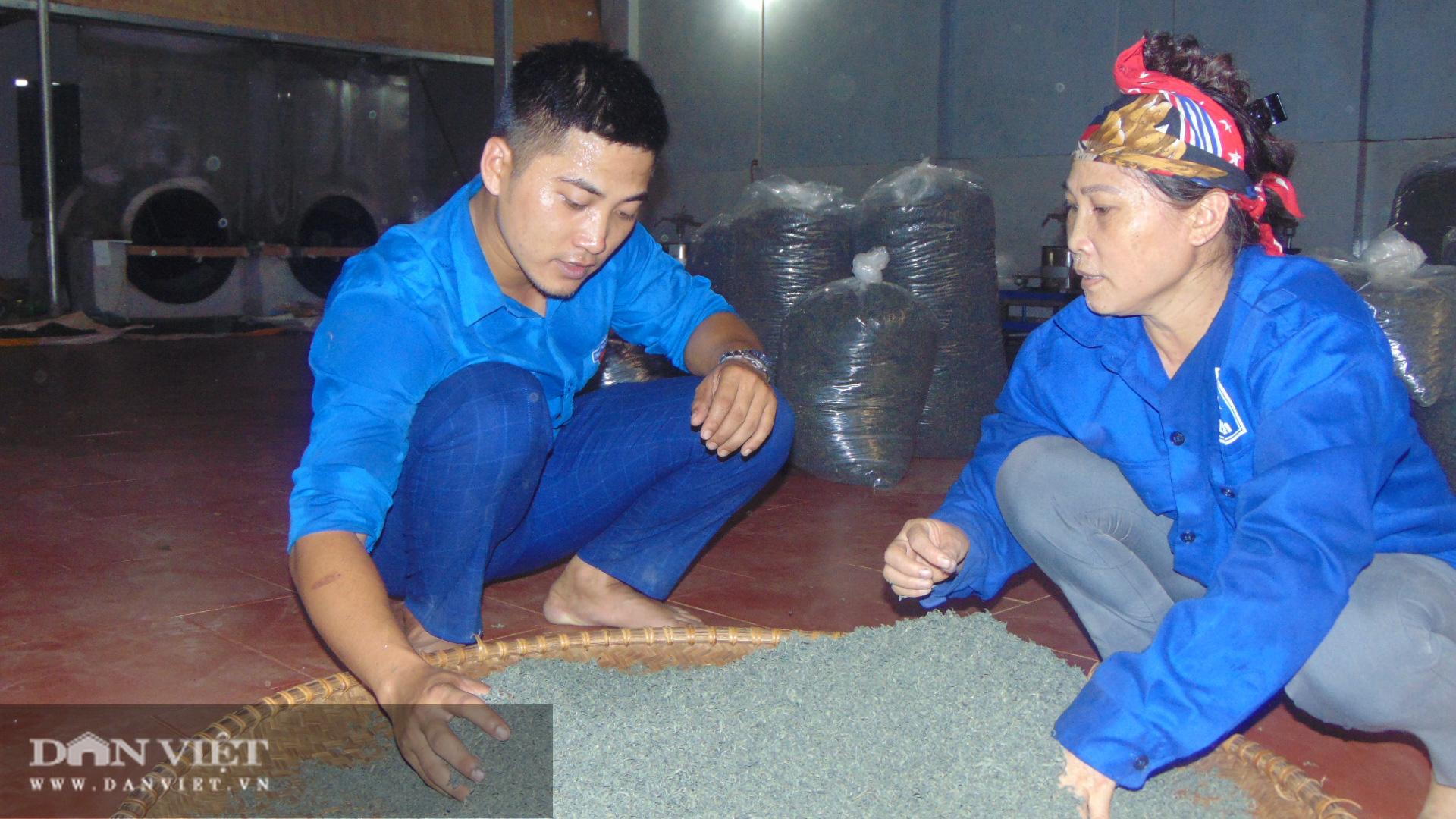 Thanh niên trẻ khởi nghiệp với nghề chè truyền thống  - Ảnh 4.