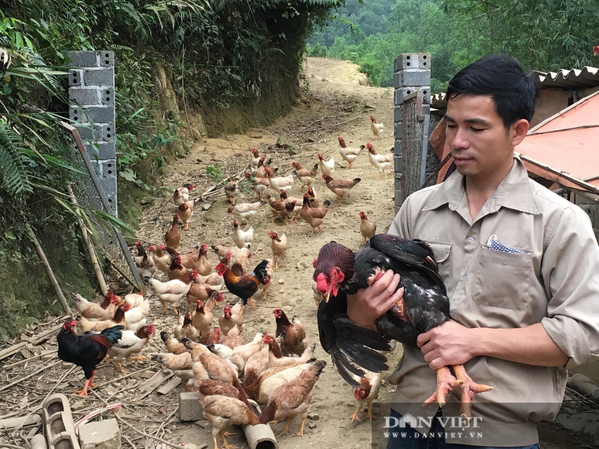 Trai xứ Mường nuôi gà thả vườn có của ăn của để - Ảnh 2.