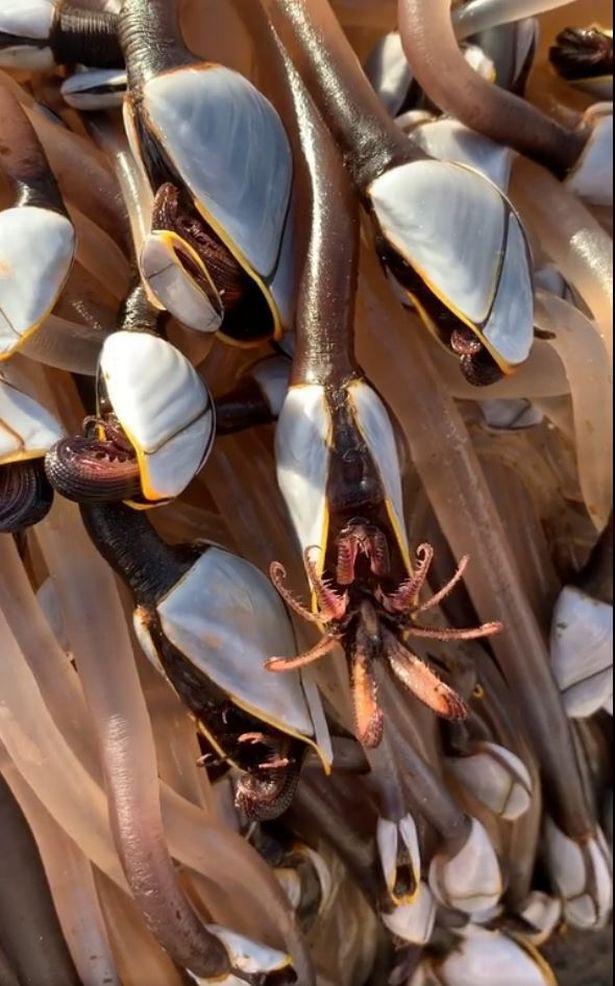 Thành tỷ phú nhờ vớt được sinh vật biển quý hiếm trôi dạt vào bờ - Ảnh 1.