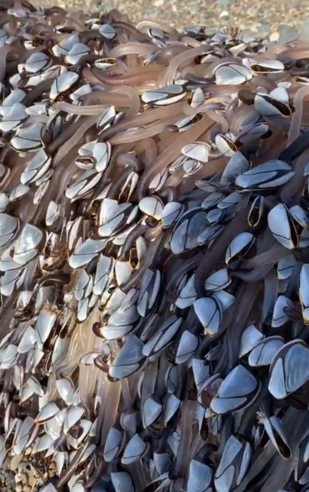 Thành tỷ phú nhờ vớt được sinh vật biển quý hiếm trôi dạt vào bờ - Ảnh 2.