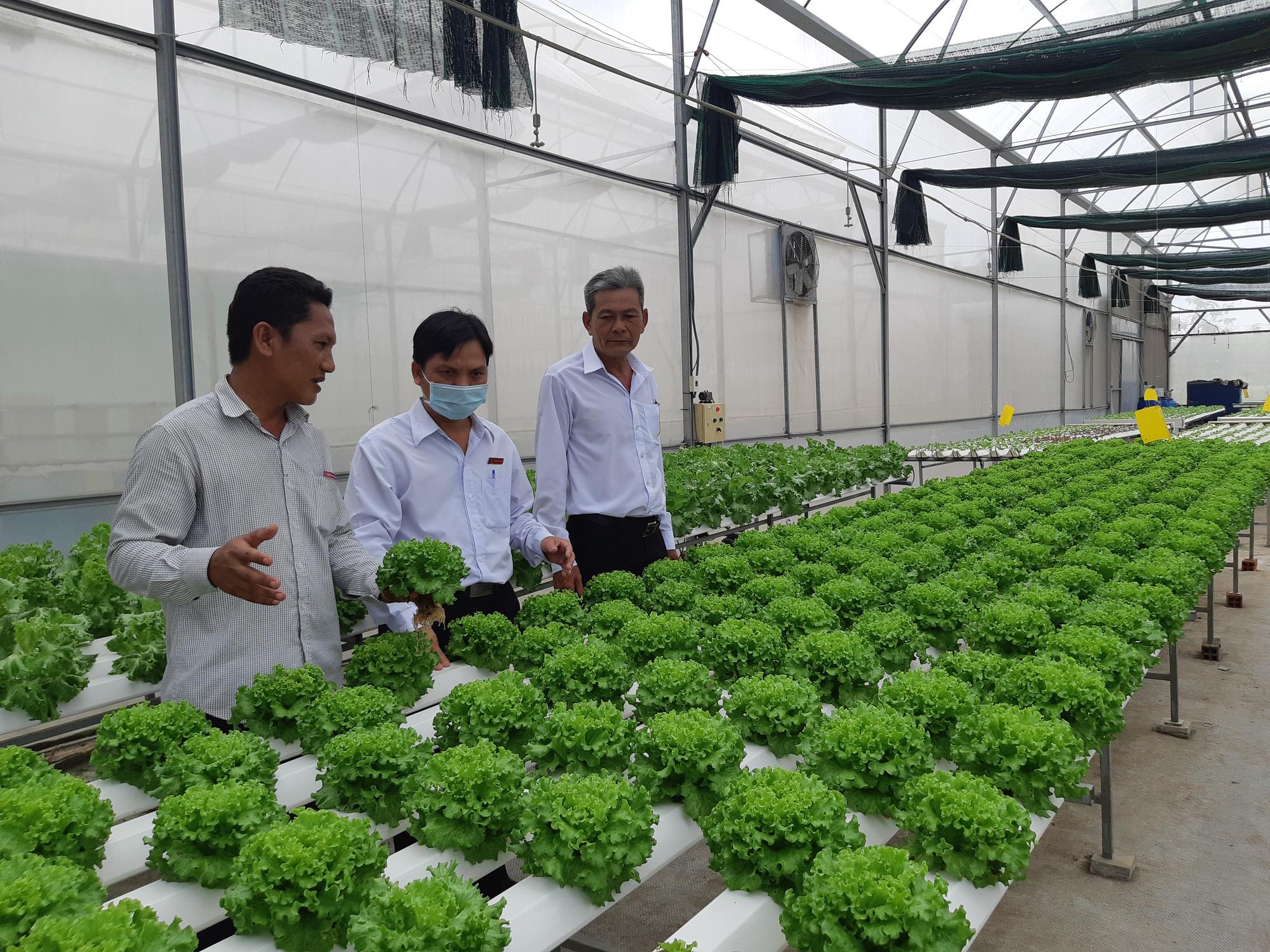 Agribank Đông Long An đồng hành với người dân trồng rau an toàn - Ảnh 1.