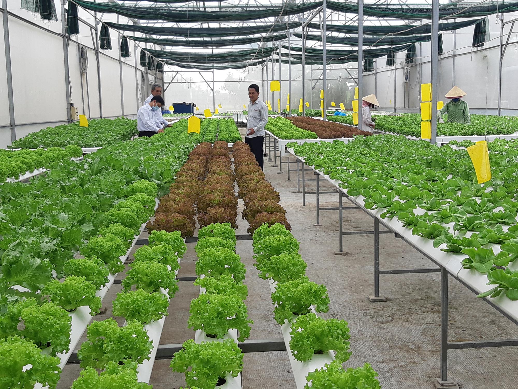 Agribank Đông Long An đồng hành với người dân trồng rau an toàn - Ảnh 2.