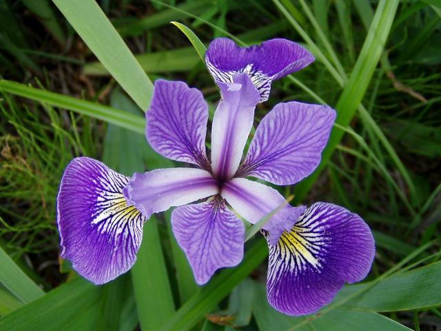 3 loài hoa thịnh vượng, điềm lành và sung túc trồng trong nhà không phải ai cũng biết - Ảnh 12.