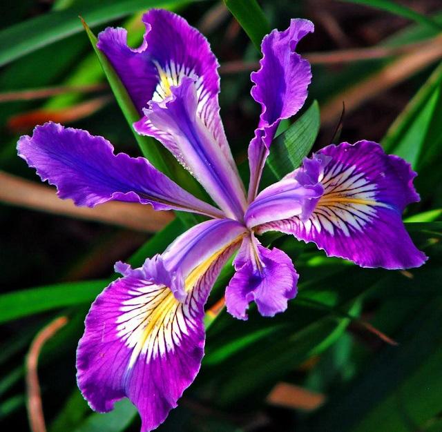 3 loài hoa thịnh vượng, điềm lành và sung túc trồng trong nhà không phải ai cũng biết - Ảnh 10.