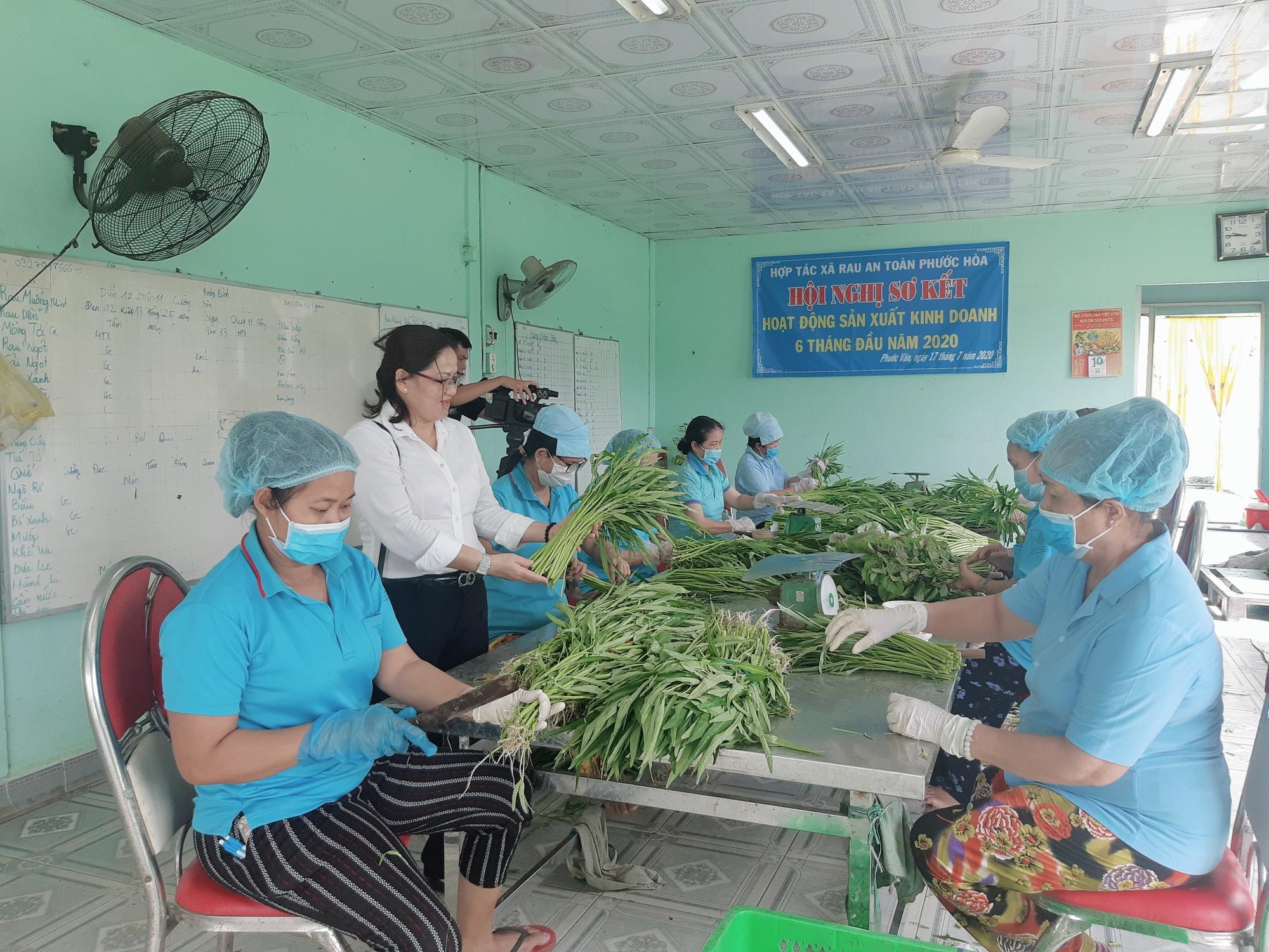 Agribank Đông Long An đồng hành với người dân trồng rau an toàn - Ảnh 3.