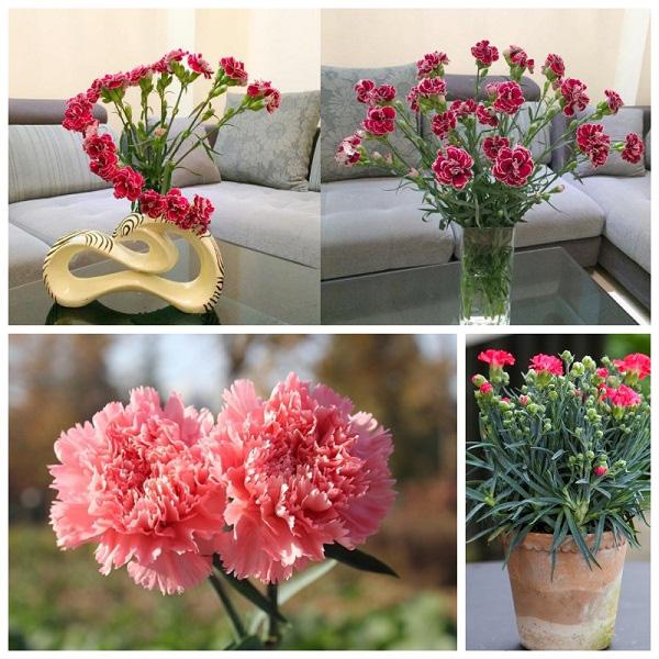 3 loài hoa thịnh vượng, điềm lành và sung túc trồng trong nhà không phải ai cũng biết - Ảnh 7.