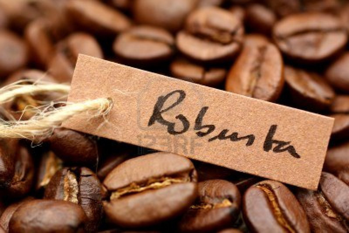 Cà phê robusta xuất khẩu sang thị trường EU