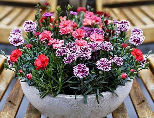 3 loài hoa thịnh vượng, điềm lành và sung túc trồng trong nhà không phải ai cũng biết - Ảnh 6.