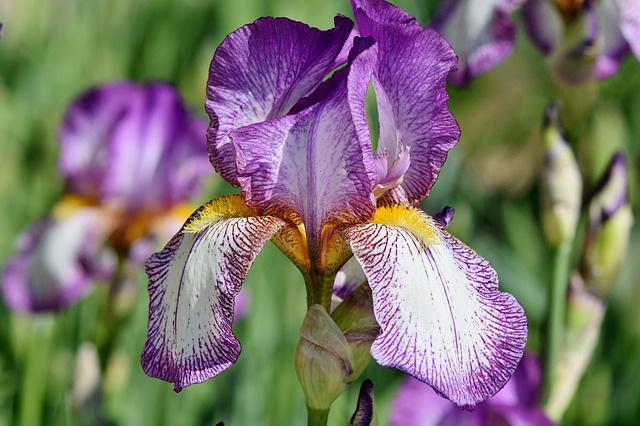 3 loài hoa thịnh vượng, điềm lành và sung túc trồng trong nhà không phải ai cũng biết - Ảnh 11.
