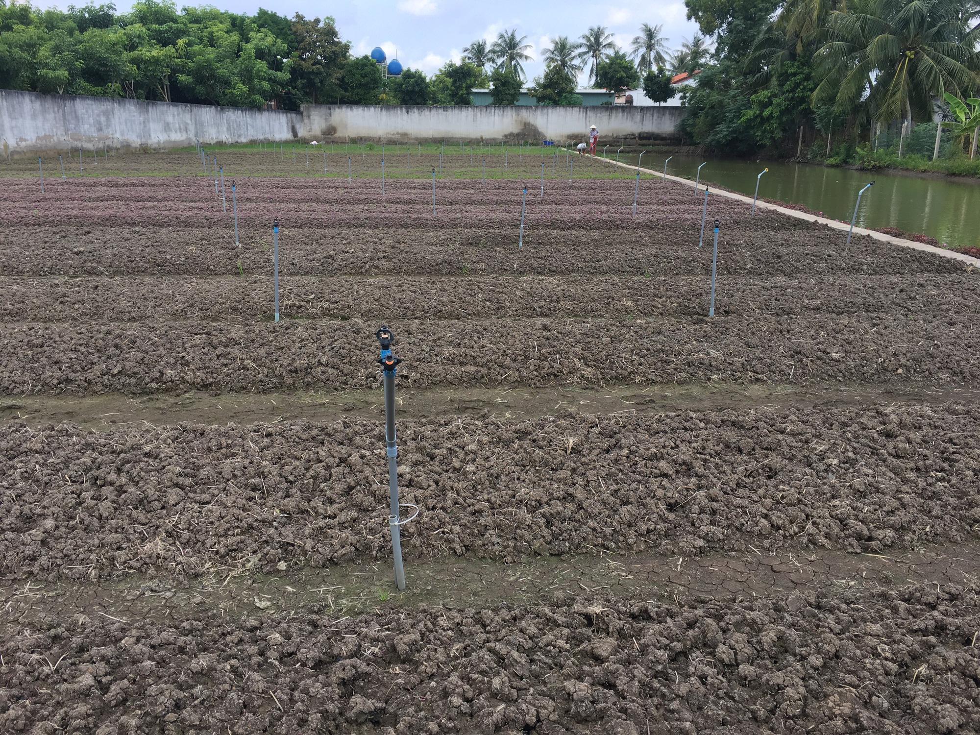 Agribank Đông Long An đồng hành với người dân trồng rau an toàn - Ảnh 4.
