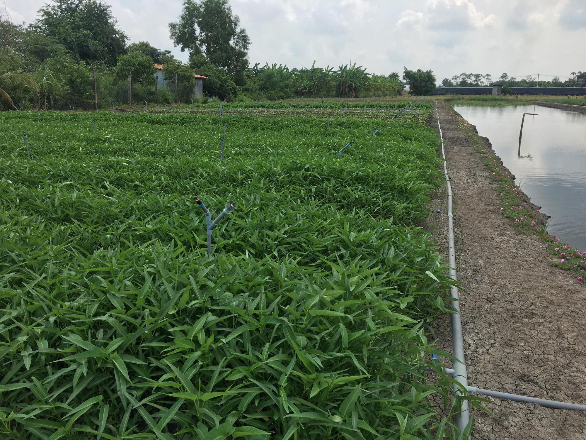 Agribank Đông Long An đồng hành với người dân trồng rau an toàn - Ảnh 5.