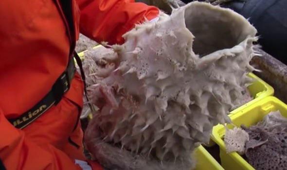 Sốc với những sinh vật bí ẩn, chưa từng thấy ẩn náu ở Nam Cực - Ảnh 3.