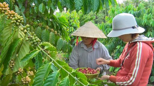 Tín chỉ chứng minh giá trị nông sản Việt - Ảnh 1.