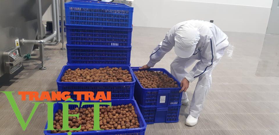 Nhà máy chế biến hoa quả tươi hiện đại nhất đất Tây Bắc chuẩn bị hoạt động - Ảnh 2.
