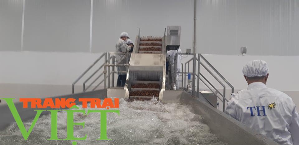 Nhà máy chế biến hoa quả tươi hiện đại nhất đất Tây Bắc chuẩn bị hoạt động - Ảnh 11.