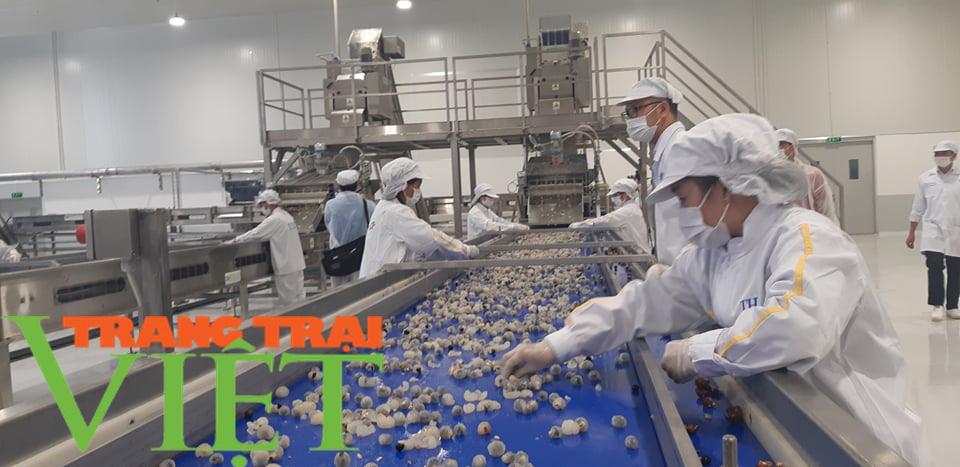 Nhà máy chế biến hoa quả tươi hiện đại nhất đất Tây Bắc chuẩn bị hoạt động - Ảnh 7.