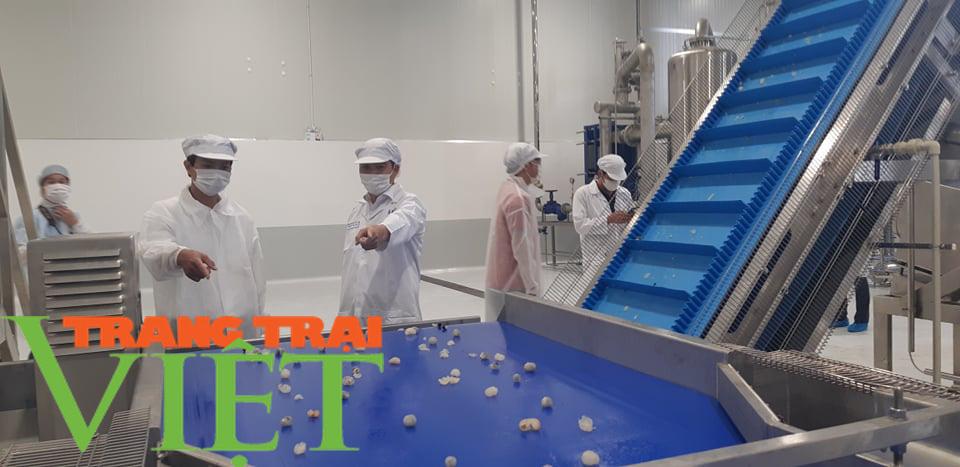 Nhà máy chế biến hoa quả tươi hiện đại nhất đất Tây Bắc chuẩn bị hoạt động - Ảnh 9.