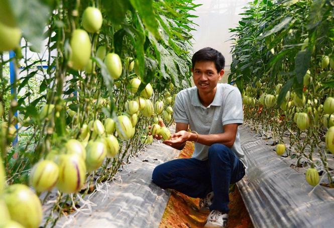 Nông nghiệp thông minh 4.0: Kinh nghiệm từ Lâm Đồng - Ảnh 1.