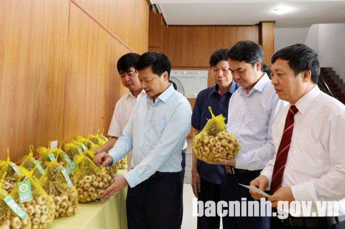 """Bắc Ninh: """"Tỏi An Thịnh"""" được trao bằng sở hữu trí tuệ về chỉ dẫn địa lý - Ảnh 1."""