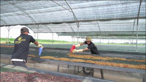 """Doanh nhân Thái Như Hiệp cùng giấc mơ """"Mang cà phê hữu cơ Việt ra thế giới"""" - Ảnh 2."""