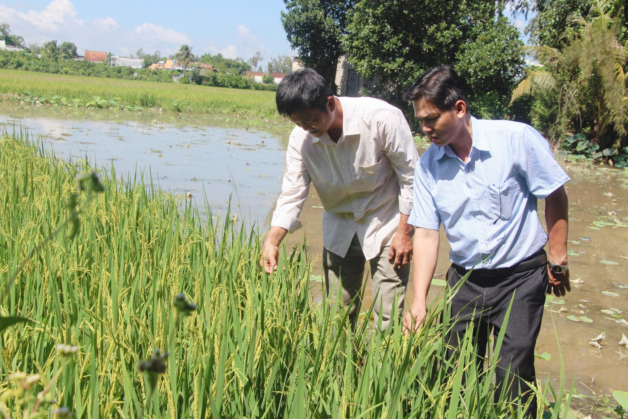 Bí quyết của thầy giáo nghèo trở thành nông dân xuất sắc toàn quốc - Ảnh 4.
