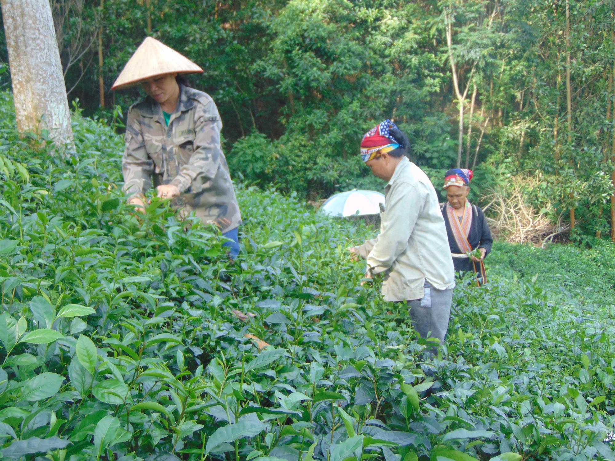 Thái Nguyên xây dựng NTM gắn với phát triển các sản phẩm nông nghiệp giá trị - Ảnh 3.