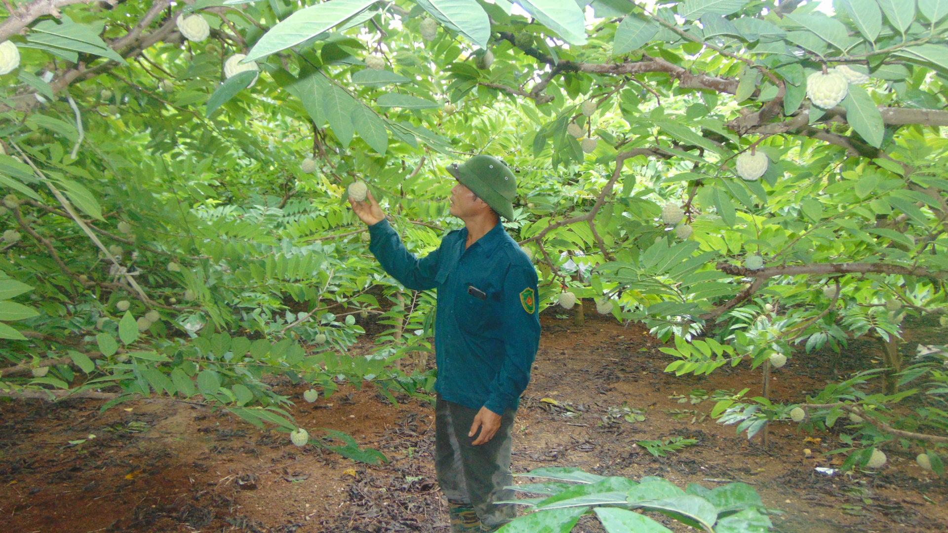 Thái Nguyên xây dựng NTM gắn với phát triển các sản phẩm nông nghiệp giá trị - Ảnh 1.
